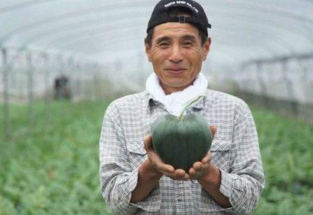 იაპონიაში გამოიყვანეს გულის ფორმის საზამთრო