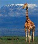 კილიმანჯაროს მთა- ტანზანია.