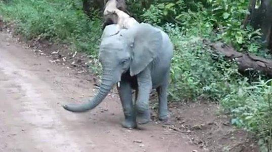მხიარული სპილო