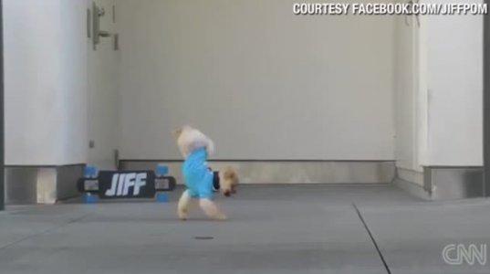 პატარა ძაღლის სახალისო ტრიუკები