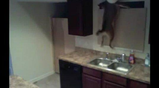 მშიერი ძაღლი სამზარეულოში შეძვრა